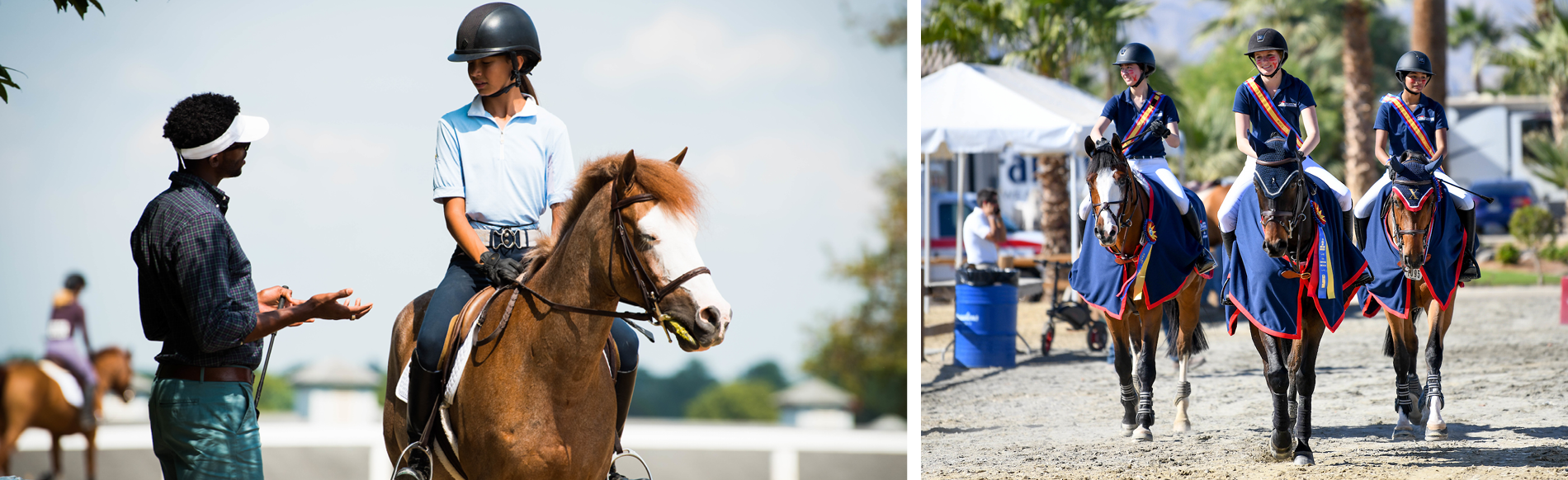 NHD Lifetime Horse | United States Hunter Jumper Association